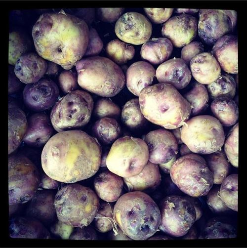 'Väike Verev' on väga vana sort, mida Eestis kasvatati toidukartuliks möödunud sajandi algul. Ta on suhteliselt väike ja ümmargune ning erksavärvilise koorega, mis võib varieeruda kasvukoha ja mullastiku tõttu.